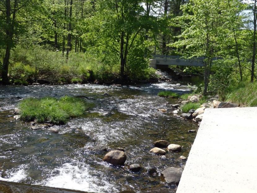 Vermont Swim Tour: LakePauline